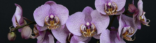 The world of 3D printed flowers: Unwinding the mysteries of the Dracula Orchid